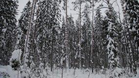 Farol de Tolbukhin no recife do Golfo da Finlândia e do forte Hummocks do gelo video estoque
