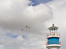 Farol e pássaros de mar Fotografia de Stock Royalty Free