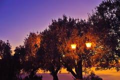 Farola con la silueta del árbol en la puesta del sol Fotografía de archivo libre de regalías