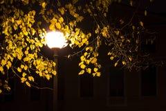 Farola luminosa en parque en la noche Foto de archivo