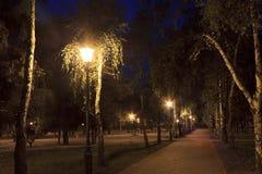 Farolas ligeras a través de las hojas de los árboles de abedul en el parque Imagen de archivo