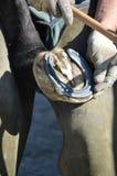 Farrier работая на лошади Стоковое Фото