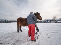 Farrier assistant keeps brown horse with front leg on steel tripod stock photos