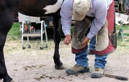 Farrier work: Cleaning a horse hoof. Royalty Free Stock Photos
