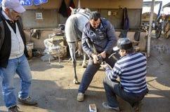 farrier De hoef van het paard het nagelen op schoenen Royalty-vrije Stock Fotografie