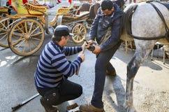 farrier De hoef van het paard het nagelen op schoenen Stock Afbeeldingen