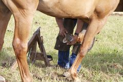 Farrier in the Field Stock Photos