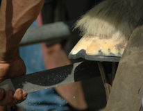 Close-up off farrier shoeing horse shoe to fit Royalty Free Stock Photography