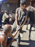 Farrier Horse foot nailing Stock Photography