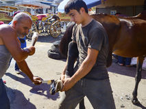 Farrier Horse foot nailing stock photos