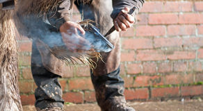 Farrier Stock Photography