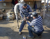 Farrier. Horse's hoof nailing on shoes Stock Images