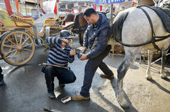 Farrier. Horse's hoof nailing on shoes Royalty Free Stock Photography