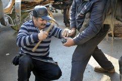 farrier Lo zoccolo del cavallo che inchioda sulle scarpe Fotografia Stock Libera da Diritti