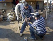farrier O casco do cavalo que prega em sapatas Imagens de Stock