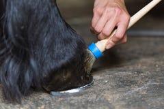 Farrier poetst horse& x27 op; s hoef Royalty-vrije Stock Fotografie