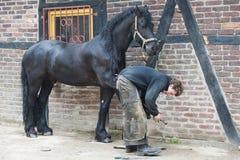 Farrier preparing hoof, Blacksmith at Work, Horseshoer stock image