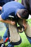 Farrier que substitui a sapata do cavalo Foto de Stock