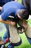 Farrier replacing horse shoe Stock Photo