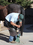 A farrier trimming a horse hoof. A farrier is trimming a barefoot horse hoof with a rasp Royalty Free Stock Photography