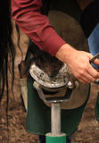 Farrier at Work Stock Photography
