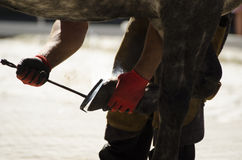 Farrier at work. Stock Image