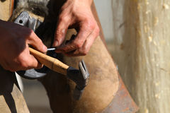 Farrier working Stock Photos