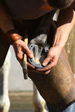 Farrier working Royalty Free Stock Photo