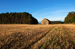 A farm storehouse in the middle of a field of barley stubble. Set against a blue sky background and surrounded by coniferous trees in north East Scotland Stock Image