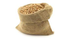 Farro grain in a burlap bag Stock Image