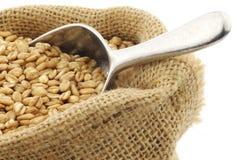 Farro grain in a burlap bag Royalty Free Stock Images