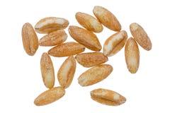 Farro Grains Stock Image