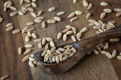 Farro Royalty Free Stock Images