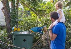 Farsan och dottern håller ögonen på hur papegojorna äter på zoo Royaltyfri Bild