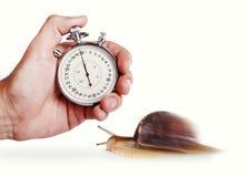 Fartfylld snail Arkivbilder