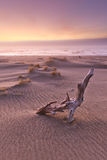Farther Back. Driftwood on a beach in Oregon takes in a foggy sunset Stock Photography