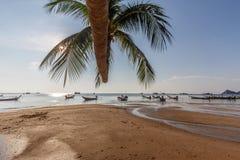 Fartyg för för Sairee strandpalmträd och taxi Royaltyfri Bild