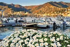 Fartyg i port av Santa Margherita Ligure med margherita blommar Royaltyfria Foton