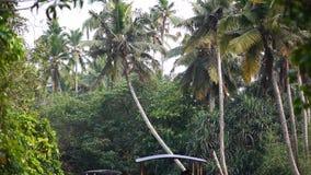 Fartyg- och palmträdavkrok i Indien Timelapse arkivfilmer