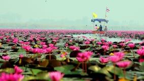 Fartyget turnerar på sjön av röd lotusblomma Arkivbilder