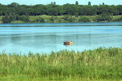 fartygflod Arkivfoto