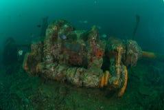 Fartyghaveri, indo-Stillahavs- sergeantdamselfish i Ambon, Maluku, Indonesien undervattens- foto Royaltyfri Foto