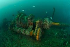 Fartyghaveri, indo-Stillahavs- sergeantdamselfish i Ambon, Maluku, Indonesien undervattens- foto Royaltyfria Bilder