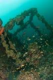 Fartyghaveriet, rev fiskar i Ambon, Maluku, Indonesien det undervattens- fotoet Royaltyfri Foto