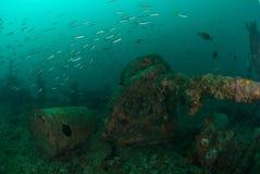 Fartyghaveriet som skolar fiskar i Ambon, Maluku, Indonesien det undervattens- fotoet Royaltyfri Bild