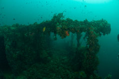 Fartyghaveriet som skolar fiskar i Ambon, Maluku, Indonesien det undervattens- fotoet Royaltyfri Fotografi