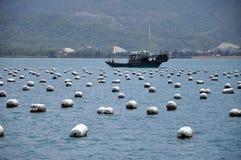 fartyglantgårdfisk Arkivfoto