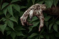 Fasa- och allhelgonaaftontema: den ruskiga smutsiga handen med den svarta fingernagellevande döden kryper ut ur gröna sidor som g Arkivfoton