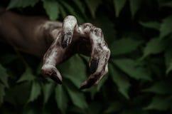 Fasa- och allhelgonaaftontema: den ruskiga smutsiga handen med den svarta fingernagellevande döden kryper ut ur gröna sidor som g Royaltyfri Bild
