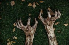 Fasa- och allhelgonaaftontema: Ruskiga levande dödhänder som är smutsiga med svart, spikar lögnen på det gröna gräset, den gå död Royaltyfria Bilder